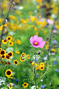 Wildflowers in the Olympic Park in Stratford, London