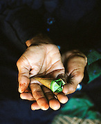 Man holding a triangular package of paan containing Betel nut, Lucknow, Uttar Pradesh, India