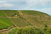 vineyard sommerberg grand cru niedermorschwihr alsace france