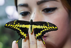 Butterfly on visitor's hand at  Dubai Butterfly Garden in United Arab Emirates