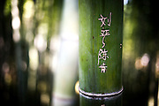 Bamboo trees are often used as a surface to leave a sign by young Chinese people and lovers. As long as graffiti writings are not socially accepted as a good habit, even if not really illegal, the dark and hidden angles of parks and forests offer secret natural sheets to declare love, friendship or simply an identity release.  <br /> <br /> © Giorgio Perottino