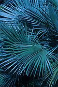 Tropical leaf patterns
