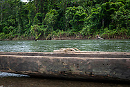 Carved dugout canoes on the Clay River in Likan, East Sepik Province, Papua New Guinea. (June 21, 2019)