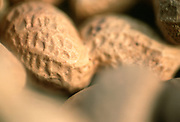 Close up selective focus photograph of peanuts in their shells