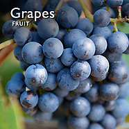 Grapes Pictures    Grapes Food  Photos & Images