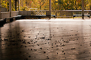 Dry leaves on the wooden bumper-car rink at Glen Echo Park. WATERMARKS WILL NOT APPEAR ON PRINTS OR LICENSED IMAGES.