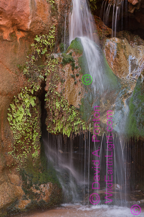 Royal Arch Creek trickles into Elves Chasm, supporting a hanging garden of moss and maidenhair fern, Grand Canyon National Park, © David A. Ponton