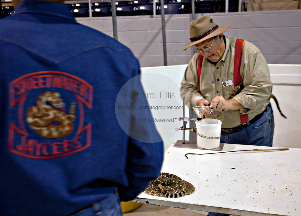 A Jaycee volunteer snake handler milks a western diamondback rattler during the 51st Annual Sweetwater Texas Rattlesnake Round-Up March 13, 2009 in Sweetwater, Texas. During the three-day event approximately 240,000 pounds of rattlesnake will be collected, milked and served to support charity.