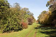 Pathway through National arboretum, Westonbirt arboretum, Gloucestershire, England, UK