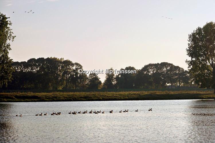 Nederland, Batenburg, 16-10-2016Rivier de Maas . Ganzen peddelen op het water . Foto: Flip Franssen