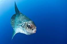 Rare and Unusual Marine Life