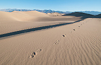 Footprints on the Mesquite Flat sand dunes, Death Valley National Park, California