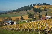 Saffron Fields Vineyard, Willamette Valley, Oregon