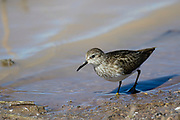 Birding photography from Arizona