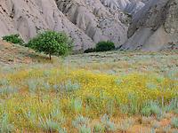 Georgia, Vashlovani National Park, Georgia, flowering semi-desert with Badlands