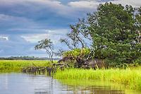 A treen hangs over the edge a hammock in a coastal salt marsh.