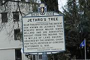 Jethro's Tree, Concord, Massachusetts.