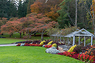 The Rose and Perennial Garden in Vancouver's Stanley Park.  I have normally photographed this area in the spring with the Cherry trees in blossom rather than in their fall foliage shown here.