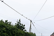 Cows gather on wires, on 28th June 2021, in Baconsthorpe, Norfolk, England.