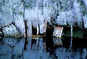 Birch bark & reflection - Quebec, Canada