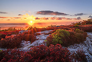 The sun rises over the mountains below the blazing red autumn huckleberry bushes of Bear Rocks at the Dolly Sods Wilderness Area of West Virginia.
