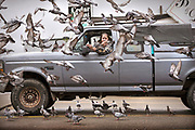 Linda Amundson feeds seed to a flock of pigeons from the cab of her truck on Oct. 2, 2019 in Ketchikan, Alaska. Amundson claims some of the pigeons are regulars to her feeding schedule and gives names to a few of them.