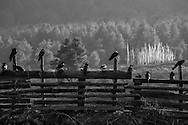 Birds in the Phobjika Valley, Wangdue Phodrang Province, Bhutan, 2014