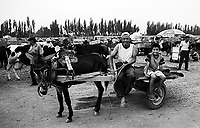 An old man and boy sitting on a donkey cart in Turfan animal market, China.