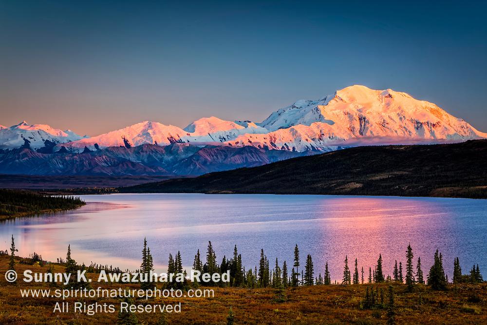 Sunset glow on Mt. Denali (McKinley) reflects on Wonder Lake, Denali National Park & Preserve, Interior Alaska, Autumn.