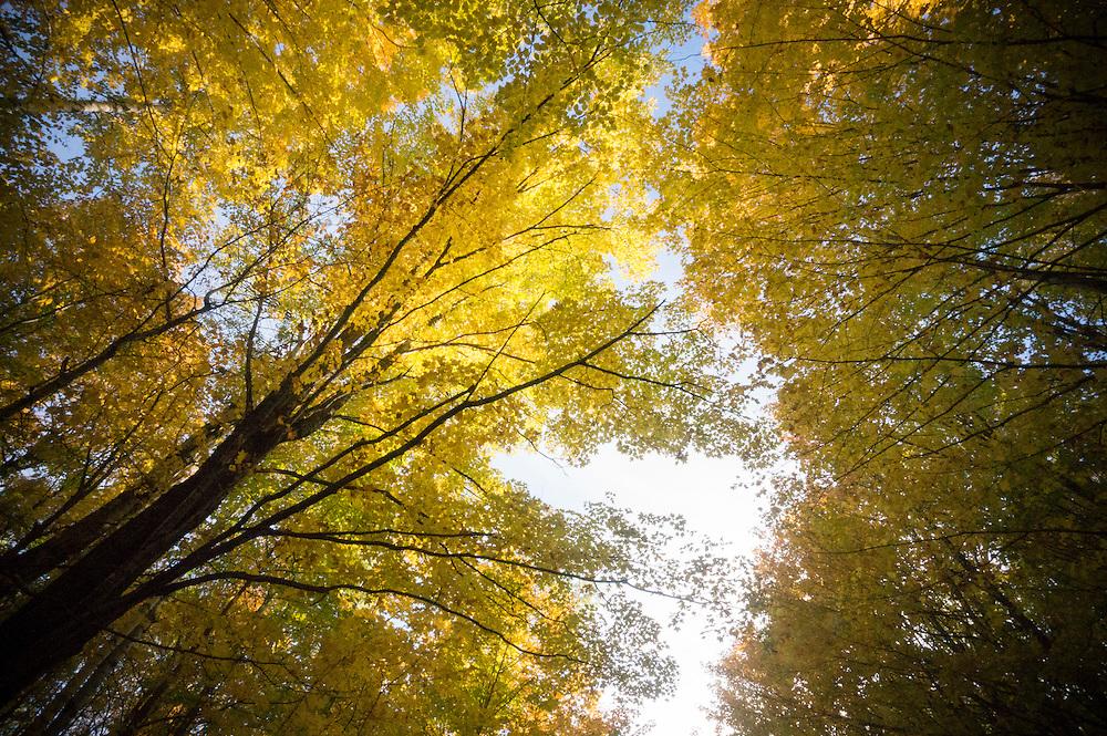 Fall color at the Echo Lake preserve near Marquette, Michigan.