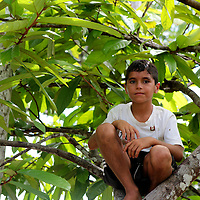 South America, Brazil, Amazon.  A young boy perched in the tree on the riverbank of the Amazon.