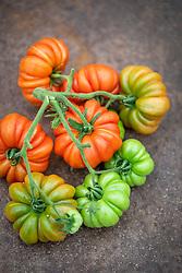 Tomato 'Costoluto Fiorentino' - Beefsteak Tomato