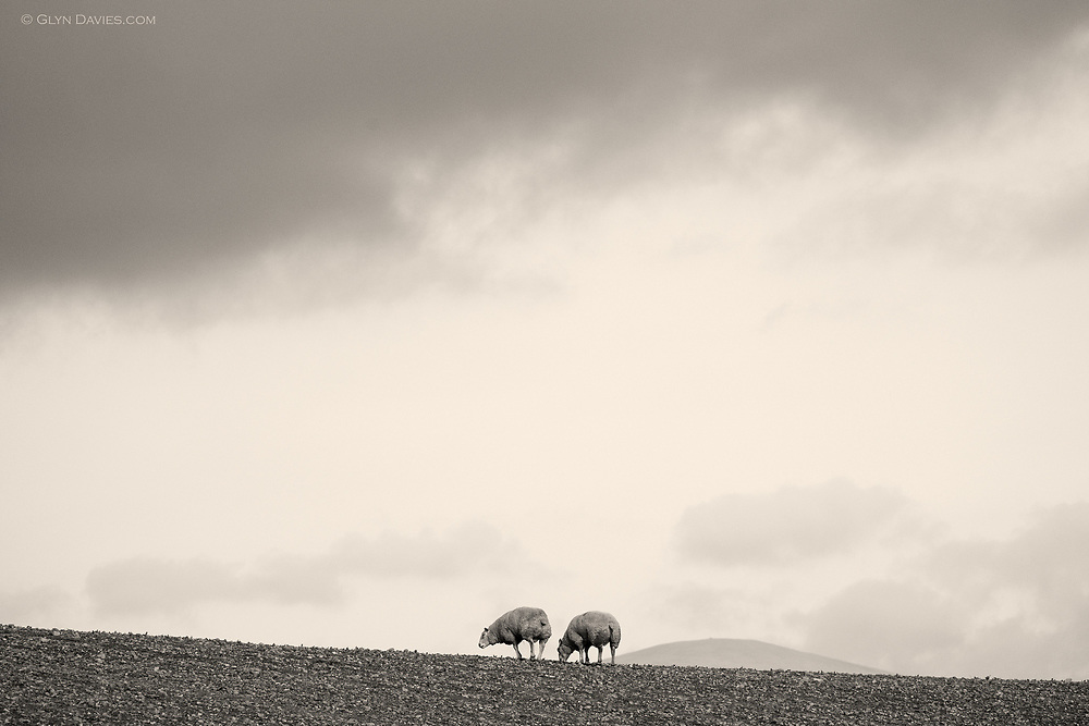 The field looked bare, just stone and earth. One sheep limped along, trying to keep her front foot off the floor. The other sheep just seemed to munch lightly on nothing. Soft clouds rolled over the hilltops and only the sound of the sea broke the serenity of this desolate little location.