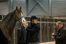 Bachmann Andersen Daniel, DEN, Blue Hors Don Olymbrio<br /> Horse Inspection - The Dutch Masters<br /> © Hippo Foto - Sharon Vandeput<br /> 14/03/19