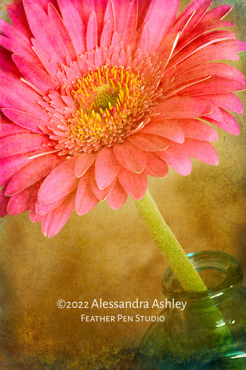 Gerbera daisy with art paper texture, warm sunny hues.