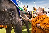 Elephant Polo 2014