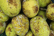 Breadfruit for Sale<br /> Suva Produce Market<br /> Suva<br /> Viti Levu<br /> Fiji. <br /> South Pacific
