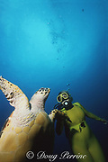 "Norine Rouse,  ""theTurtle Lady"" and hawksbill turtle, Eretmochelys imbricata, West Palm Beach, Florida ( Western Atlantic Ocean )"