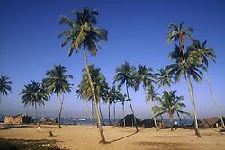 Beach scene in Goa; India; with palm trees,