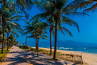 Palm trees lining the beach, Danang, Vietnam.