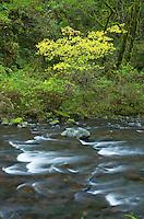 Tanner Creek, Columbia River Gorge National Scenic Area Oregon