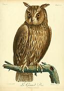 Grand-duc d'Europe Eurasian eagle-owl (Bubo bubo) Nocturnal Bird of Prey from the Book Histoire naturelle des oiseaux d'Afrique [Natural History of birds of Africa] by Le Vaillant, François, 1753-1824; Publish in Paris by Chez J.J. Fuchs, libraire .1799