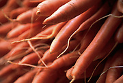 Close up selective focus photograph of fresh carrot bunches
