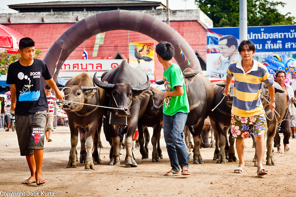 Oct. 3, 2009 - CHONBURI, THAILAND: Handlers bring their water buffalo to the track during the first day of races at the Chonburi Buffalo Races Festival, Saturday, Oct. 3. Contestants race water buffalo about 200 meters down a muddy straight away. The buffalo races in Chonburi first took place in 1912 for Thai King Rama VI. Now the races have evolved into a festival that marks the end of Buddhist Lent and is held on the first full moon of the 11th lunar month (either October or November). Thousands of people come to Chonburi, about 90 minutes from Bangkok, for the races and carnival midway. Photo by Jack Kurtz / ZUMA Press