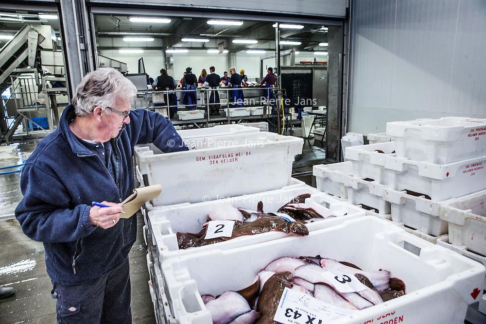 Nederland, Den Helder, 18 maart 2016.<br /> Visafslag bij Den Helder.<br /> De verse vis wordt geselecteerd en schoongemaakt voordat het verhandeld wordt.<br /> <br /> The Netherlands, Den Helder, 18 march 2016<br /> Fish processing for auction in Den Helder.The fresh fish is selected and cleaned before it is marketed.<br /> <br /> Foto: Jean-Pierre Jans