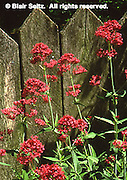 Wyck, Home of 9 Generations of Quaker Families, Philadelphia gardens and arboretums, Germantown, Philadelphia, PA