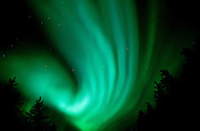 Northern lights (Aurora borealis) in the boreal forest<br /> Wood Buffalo National Park<br /> Northwest Territories<br /> Canada