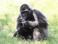 OKC Zoo - 7/20/2013