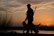 Yellow Labrador retriever and duck hunter in southern U.S. habitat