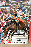 A saddle bronc rider hangs on to the bucking bronco at the Cheyenne Frontier Days rodeo at Frontier Park Arena July 24, 2015 in Cheyenne, Wyoming. Frontier Days celebrates the cowboy traditions of the west with a rodeo, parade and fair.